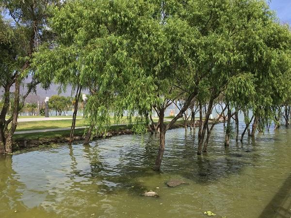画像に alt 属性が指定されていません。ファイル名: mexico-lake1.jpeg